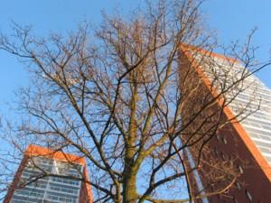 Onderaanzicht toren