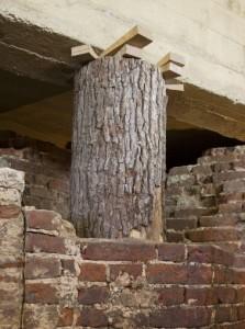 De ogenschijnlijk dragende boomstam