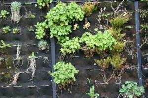 Anno 2012 zien sommige plantjes er nog weldadig en verfrissend uit.