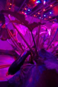 Plantlab ontwikkelt geavanceerde groeisystemen voor stadslandbouw afgesloten van daglicht en buitenlucht.