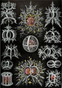 Radiolaria Bernotat & Co