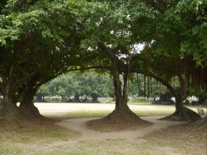 De inspiratiebron voor het gebouw: de banyanboom. Foto: Carolien Bais