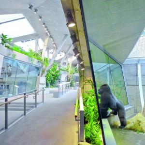 Apenhuis, Wilhelma dierentuin Stuttgart, ontwerp Hascher Jehle Architektur • Foto Svenja Bockhop