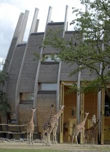 Diergaarde Blijdorp Rotterdam. Savannehuis, het huidige verblijf voor giraffen. Foto: Rob Doolaard