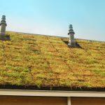 Groendaksysteem de Ecopan