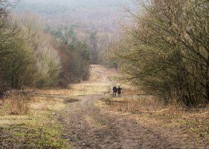 Schuldige Landschappen - heuvellandschap op de restanten van de stad Germania