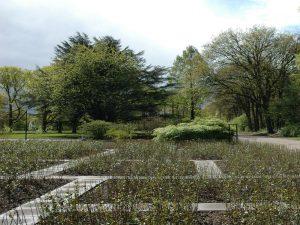 Herstelde terreinrichting naar ontwerp van Mien Ruys met groenblijvende architectonische plantenvakken • Foto Mascha van Damme