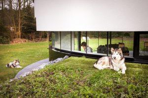 Op ooghoogte is contact met de honden op het talud mogelijk