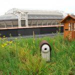 Lancering eerste groene vogeldak in Nederland -