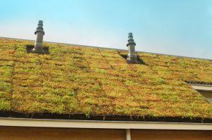 Groendaksysteem EcopanVoor en nadelen groendak