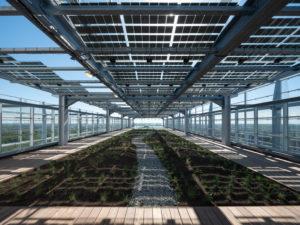 EPO Daktuin met sterke lage beplanting en een schelpenpad. PV-panelen zorgen voor schaduw en de  glasgevels voor luwte. Foto Ossip van Duivenbode