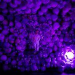 Moco Museum - Daniel Arsham - Amethyst Ball Cavern