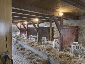 Koeien. Maze de Boer.  Foto Erik Hesmerg